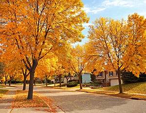 Fall Trees Nestled in a Subdivision ©